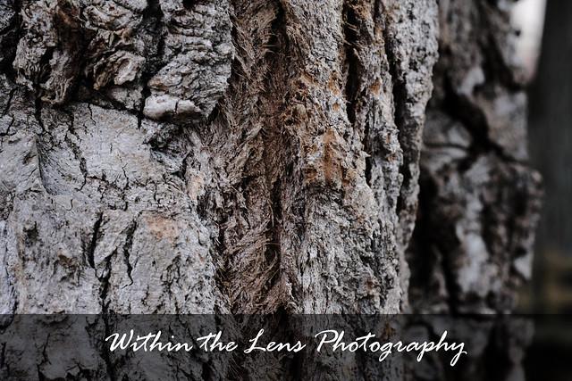 tree trunk, tree, trunk, bark, tree bark, within the lens, photography