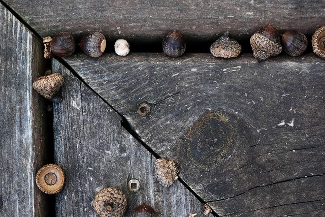 {271/365} acorns
