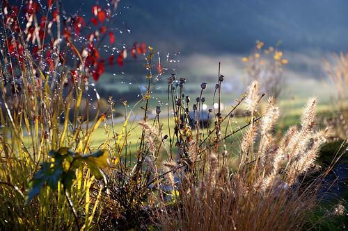 tempo lucente, e irreversibile, d'autunno