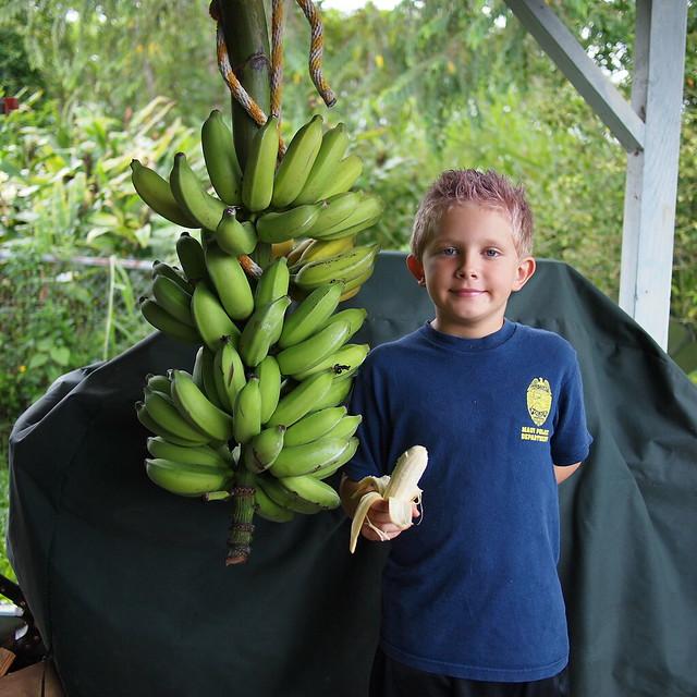 Banana Taste Test #1