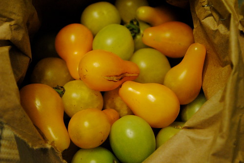 More Baby Heirloom Tomatoes