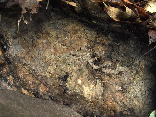 leafy ground under rock #3