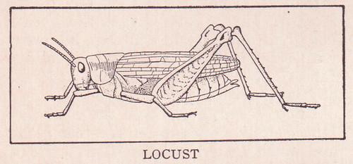 Locust page 1682