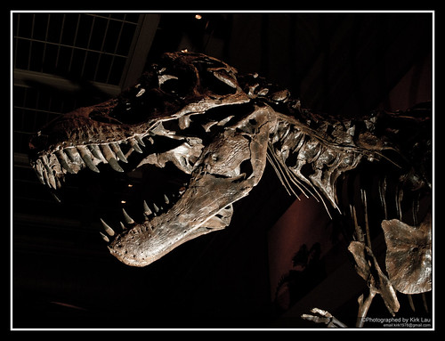 [Strobist] The T-REX, no meat!