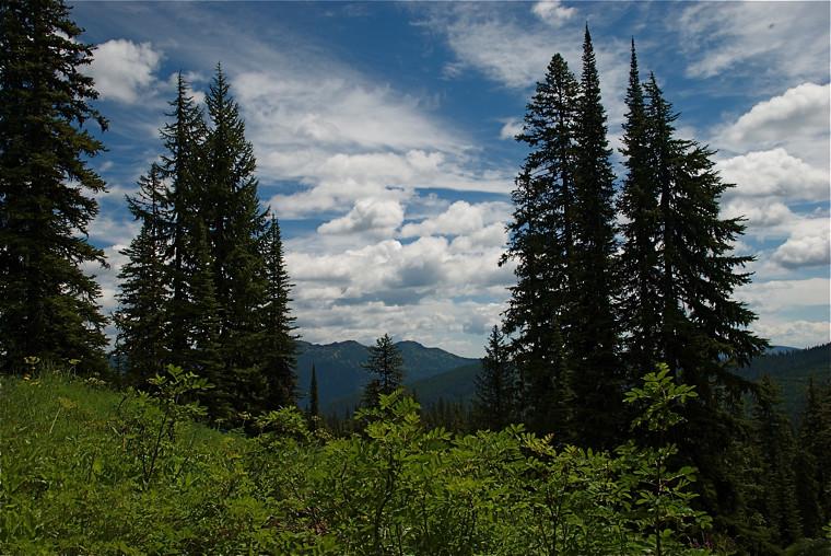 Cabin Lake trail