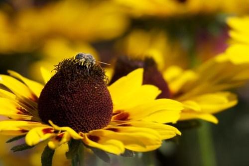 Little bee, big flower