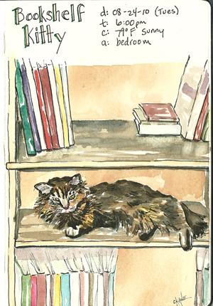 20100824_bookshelf_kitty