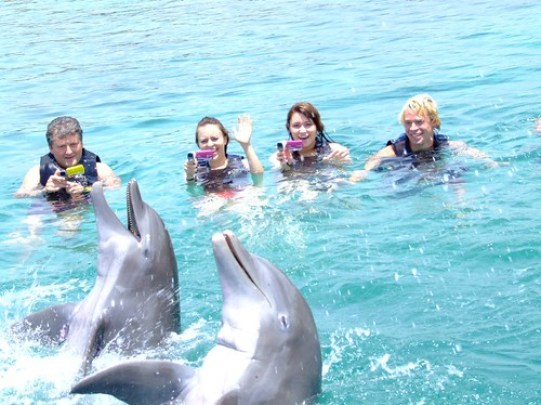 Dolphing Cove 3