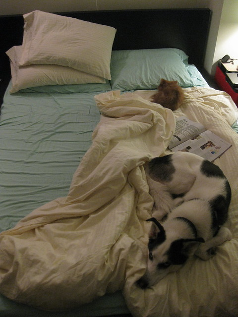 Doggies in bed