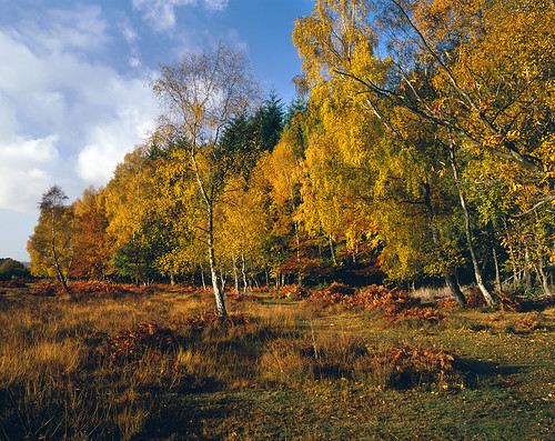 New Forest Autumn 3