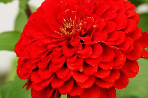 365-217 Floral Hope