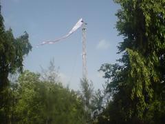 Bavan Gaj Dhaja - Danidhar