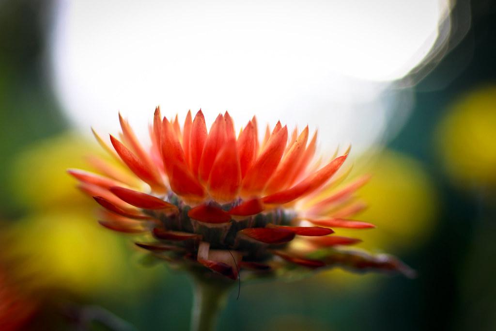 Flower beam