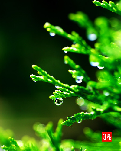 D80-CHI_WaterDroplet01_2010-07_08B