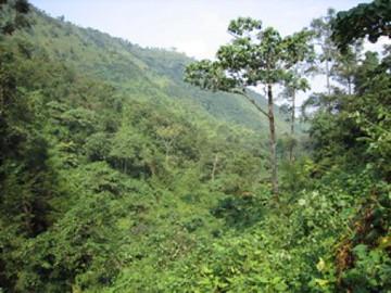 View when Gorilla Trekking Uganda