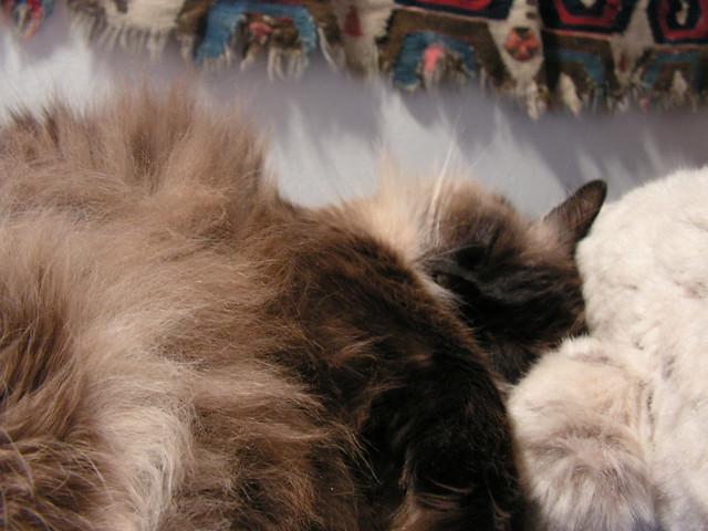 A Floofy Nap