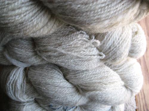 shetland closeup