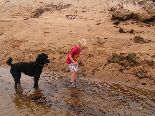 Max and Lucy, hunting for crabs