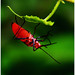 """Acrobatic Bug #2 • <a style=""""font-size:0.8em;"""" href=""""http://www.flickr.com/photos/8038254@N06/4894509398/"""" target=""""_blank"""">View on Flickr</a>"""