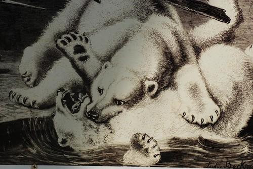 Bärenkampf im Kölner Zoo