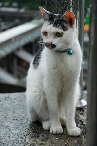我是小日本貓