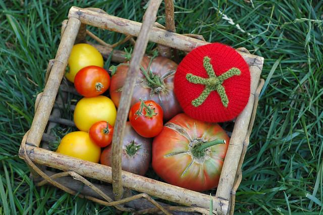 Knit Tomato - Amigurumi Knits