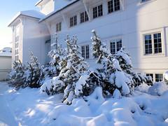 Fir trees by Radisson Blue Hotel, Norway