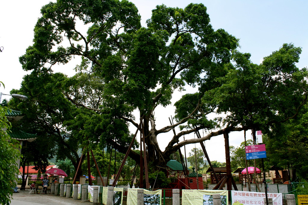 Wishing Tree at Lam Tsuen