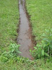 downstream of culvert.JPG