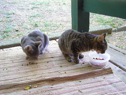 hearing: kittens