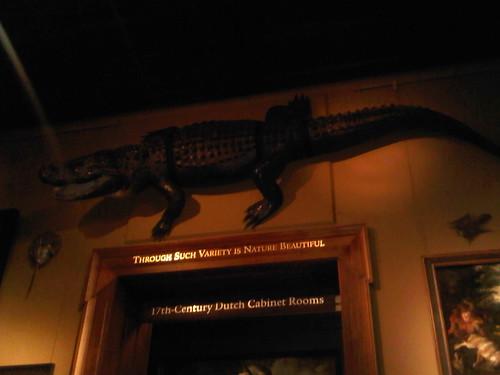 2010.10.03 Crocodile