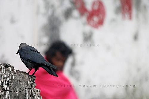 আলোকচিত্রশিল্পী: ফয়সাল মাসুম