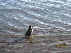 bird release 9 2010 012
