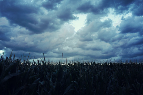 smIMG_1661corn&clouds