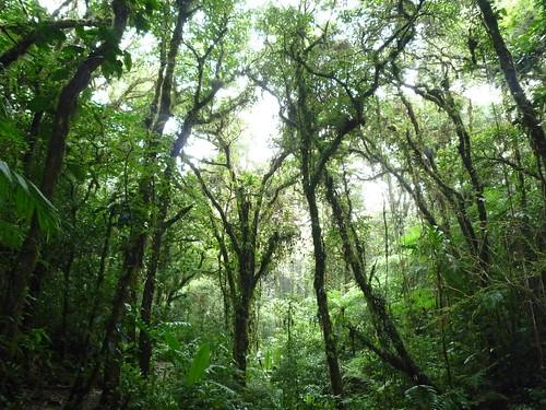 Im Nebelwald von Santa Elena, Monteverdegebiet