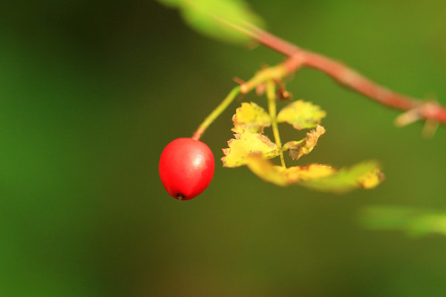 Berry and Bokeh