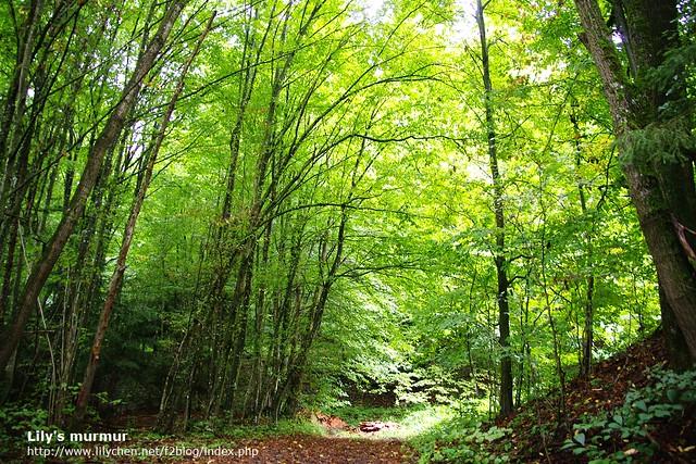 尼家旁邊的森林,好美麗,讓我想到納尼亞傳奇跟星塵傳奇這兩部電影。