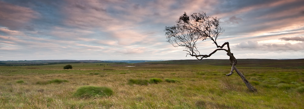 All alone on Big Moor-6525