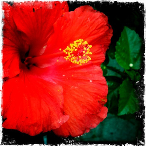 Red red flower