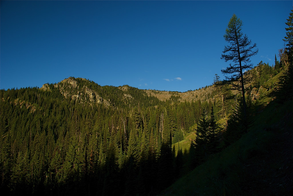 Along trail 478 to Mt Silcox