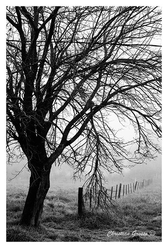 "Niebla en Cañuelas • <a style=""font-size:0.8em;"" href=""http://www.flickr.com/photos/20681585@N05/4975924554/"" target=""_blank"">View on Flickr</a>"
