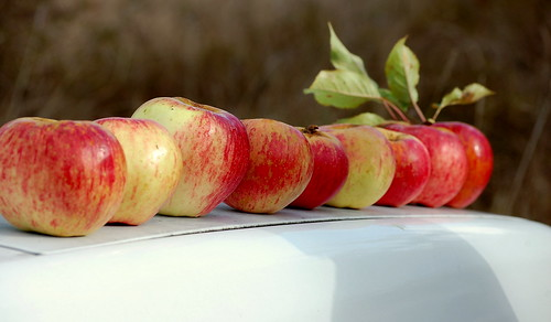 apple beauty contest