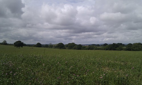 Field near Henstridge
