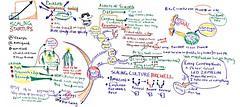 supernova forum 2010: scaling startups