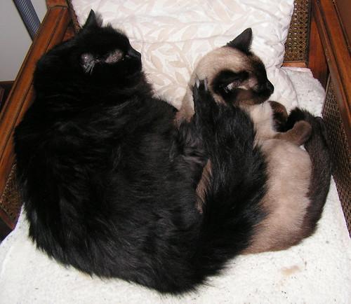Tashi snuggles under the Bearaboo Blankie