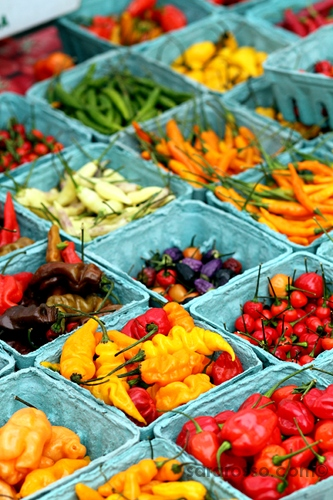 Hot peppers in all colors at Union Square Greenmarket Farmers Market, New York City