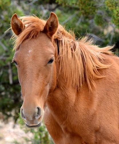 NM Wild Horses nwm (9)