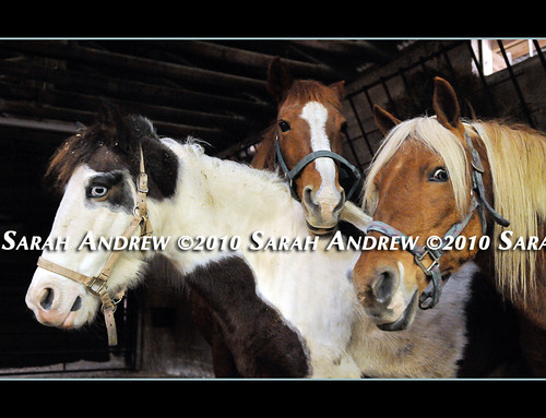 This Week's Available Horses at Camelot Auction