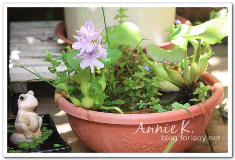 水生植物4