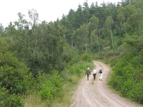 Boblainy Forest